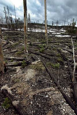 Poster featuring the photograph Wild Fire Aftermath by Amanda Stadther