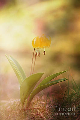 Wild Flower Dream I I Poster by Sharon Elliott