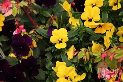 Wild Flowers 5d22461 Poster