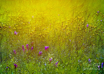 Wild Flowers In Morning Light Poster by Odon Czintos