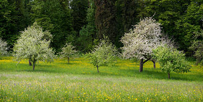 Wild Flowers With Blossoming Apple Poster by Panoramic Images