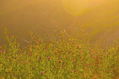 Wild Flowers With Webs Poster by Deprise Brescia