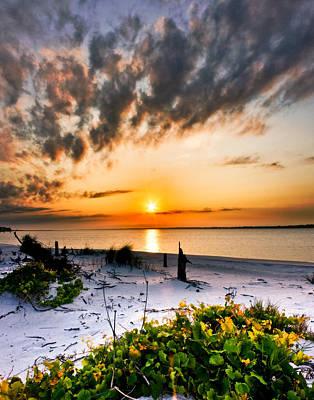 Wild Grape Sunset Orange Sun Beach White Sand Landscape Art Poster by Eszra