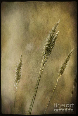 Poster featuring the photograph Wild Grasses by Chris Armytage
