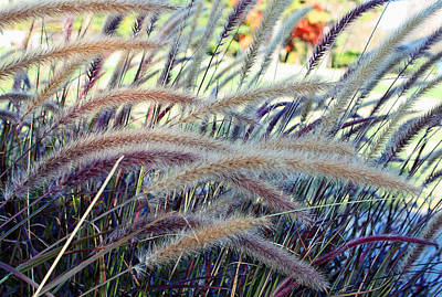 Wild Grasses In Autumn Poster