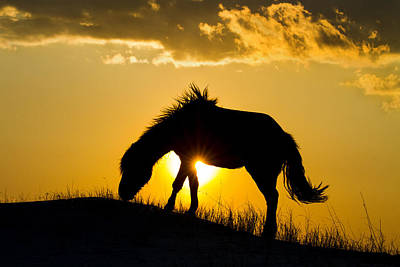 Wild Horse And Setting Sun Poster
