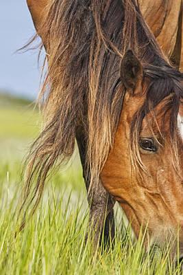Wild Horse Grazing Poster