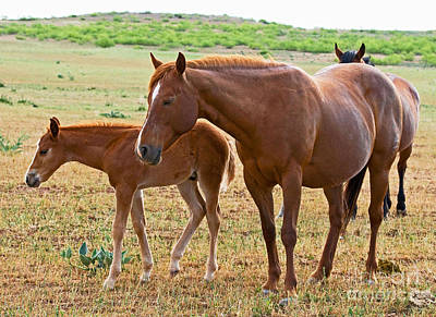 Wild Horse Mother And Foal Poster by Millard H. Sharp