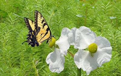 Wild Marsh Flower And Butterfly Poster