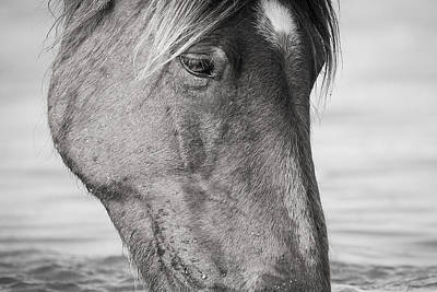 Wild Mustang Feeding Poster