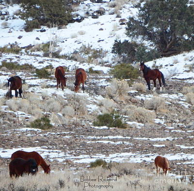 Wild Mustangs In A Nevada Winter Poster