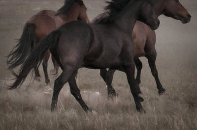 Wild Mustangs Of New Mexico 16 Poster