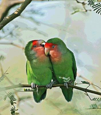 Wild Peach Face Love Bird Whispers Poster by Tom Janca