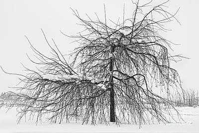 Wild Springtime Winter Tree Black And White Poster
