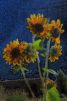 Wild Sunflowers Pencil Drawing Poster by Scott Campbell