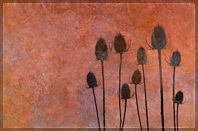 Wild Teasel Shadow Play Poster by Cora Niele