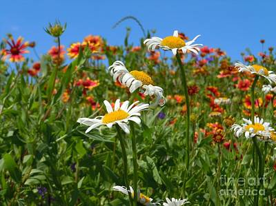 Poster featuring the photograph Wild White Daisies #1 by Robert ONeil