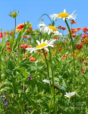 Poster featuring the photograph Wild White Daisies #2 by Robert ONeil