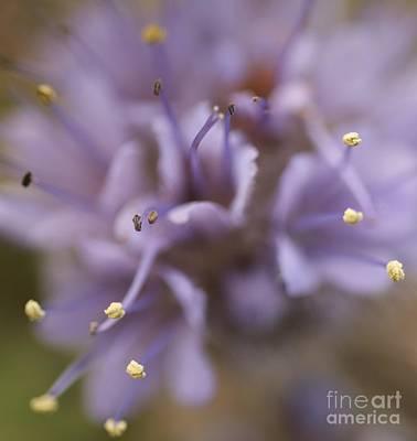 Wild Wildflower Poster