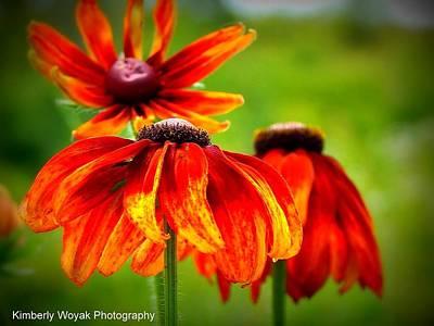 Wildest Bloom Poster