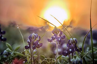 Wildflower Glow Poster