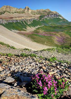 Wildflowers Above Timpanogos Basin At Sunrise Poster