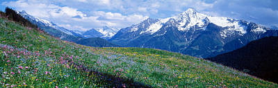 Wildflowers Along Mountainside Poster by Panoramic Images