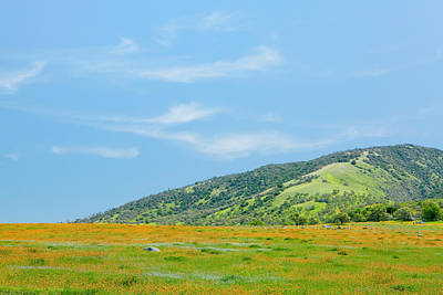 Afternoon Delight - Wildflowers And Cirrus Clouds - Spring In Central California Poster