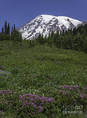 Wildflowers And Mt Rainier Summit Poster