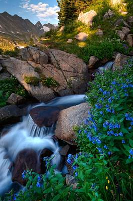 Wildflowers And Waterfalls In The Indian Peaks Poster by Mike Berenson