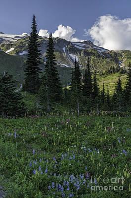 Wildflowers At Rainier Poster