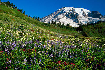 Wildflowers Blooming In Front Of Snowy Poster by Panoramic Images