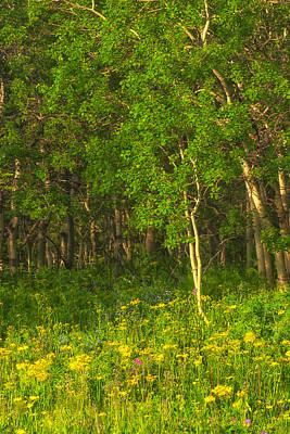 Poster featuring the photograph Wildflowers Glacier National Park Montana by Ram Vasudev