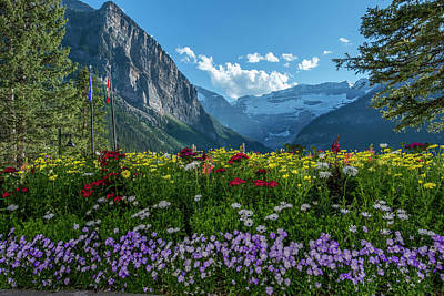 Wildflowers In Banff National Park Poster