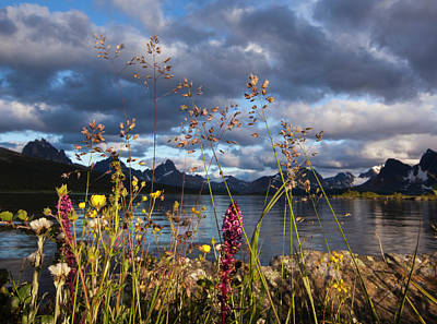 Wildflowers In The Canadian Rockies Poster by Art Wolfe