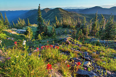 Wildflowers In The Whitefish Range Poster by Chuck Haney