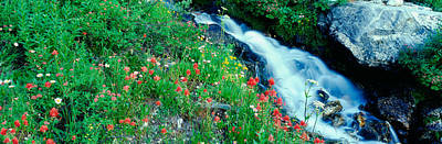 Wildflowers Near A Stream, Grand Teton Poster by Panoramic Images