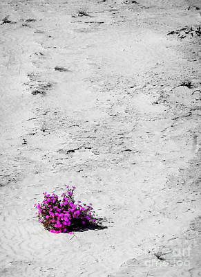 Wildflowers On White Sands Poster