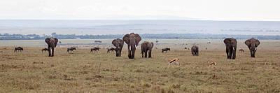 Wildlife On The Masai Mara - Kenya Poster