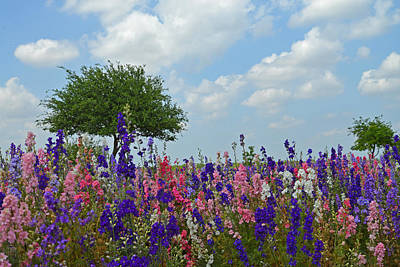 Wildseed Farms Wildflowers Poster by Lynn Bauer