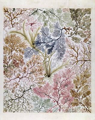 William Kilburs Seaweed Fabric Design Poster