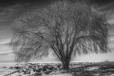 Willow At Edgewater Park In Winter Poster by Michael Demagall