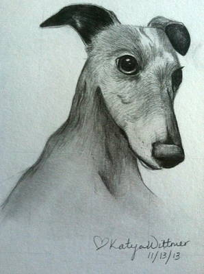 Willy The Whippet Poster by Katya Wittmer