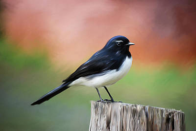 Willy Wagtail Austalian Bird Painting Poster