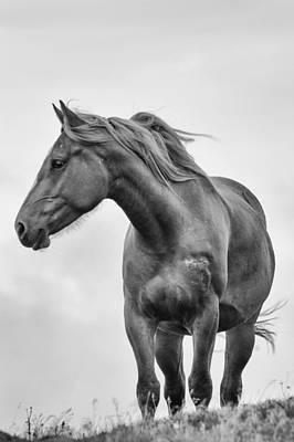Windblown Horse Poster