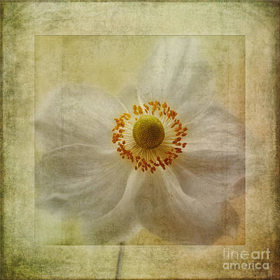 Windflower Textures Poster by John Edwards