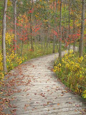 Winding Woods Walk Poster by Ann Horn