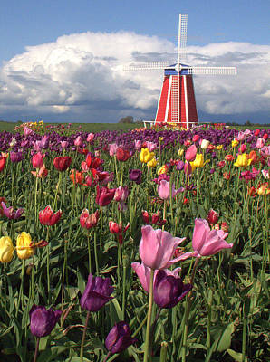 Windmill In The Tulips Poster by Suzy Piatt