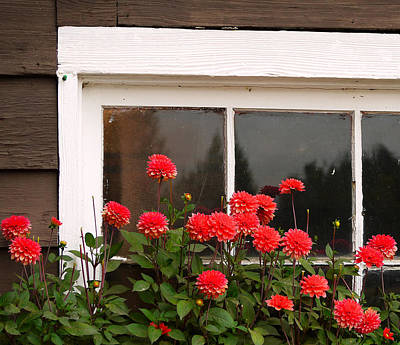 Poster featuring the photograph Window Box Delight by Jordan Blackstone