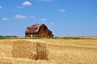 Windswept And Lonely Colorado Barn Poster